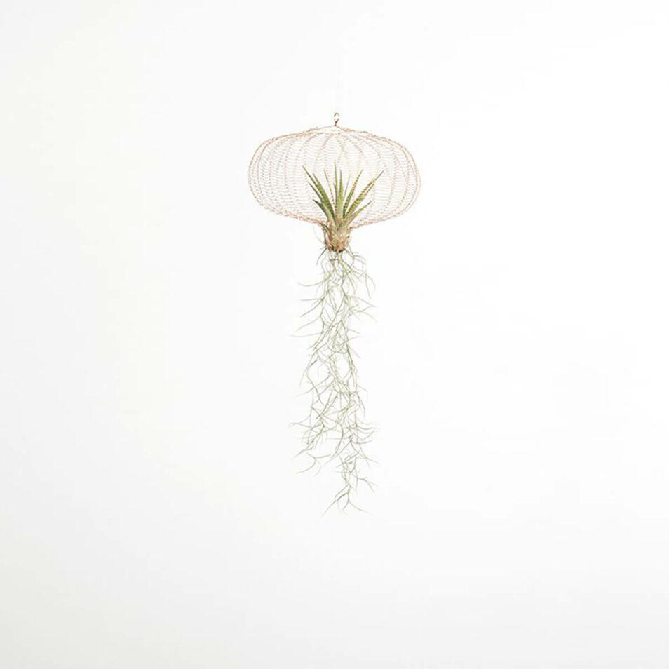 Luft plante